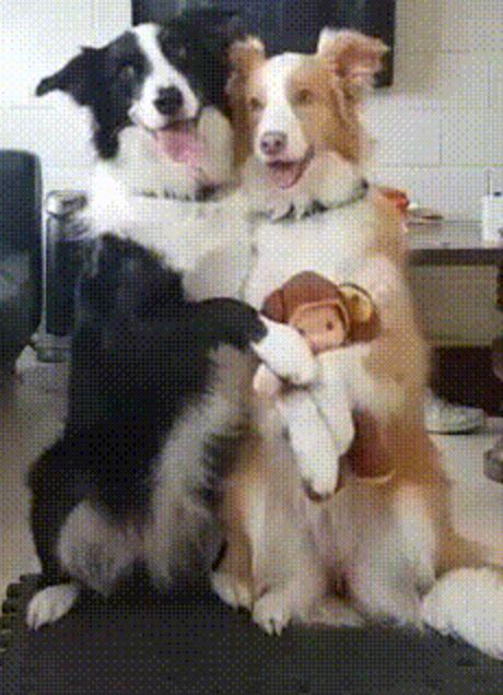 Домашние собаки фото. Canis lupus familiaris, Canis familiaris