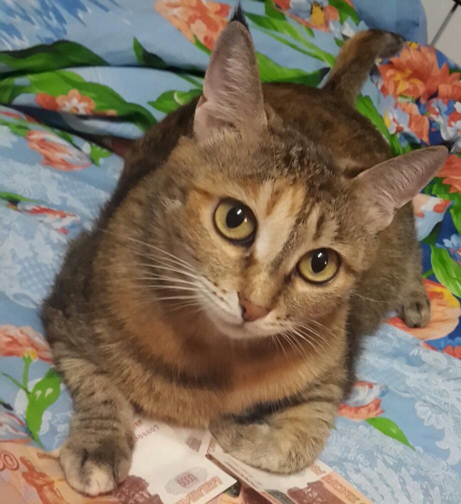 Домашняя кошка фото. Felis silvestris catus