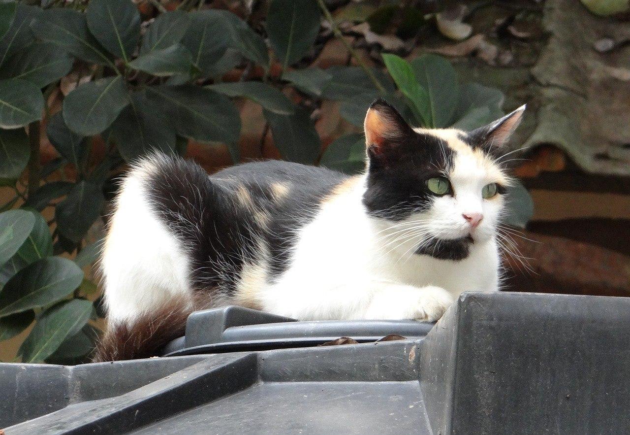 Кошки фото. Felis