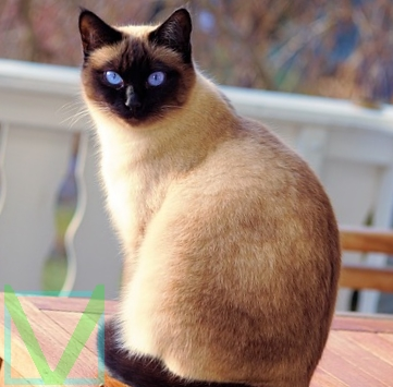 Кошка фото