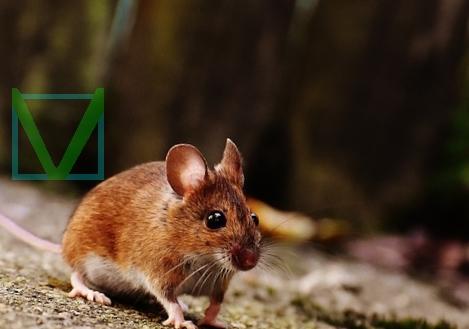 Мышка фото
