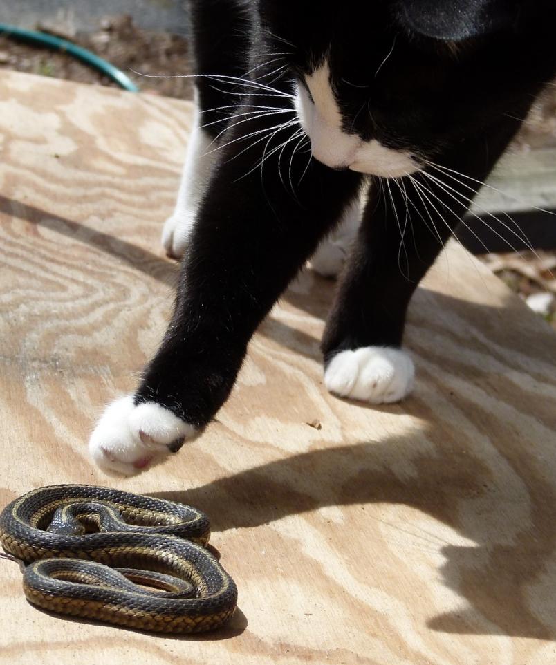 Кошка и змея фото