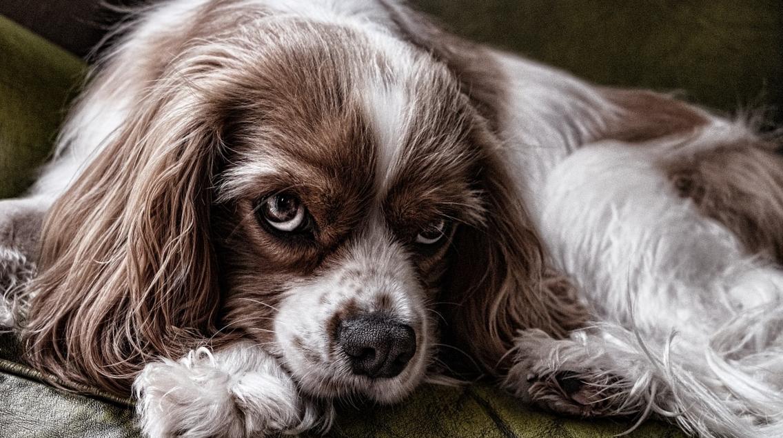 Виноватая собака фото
