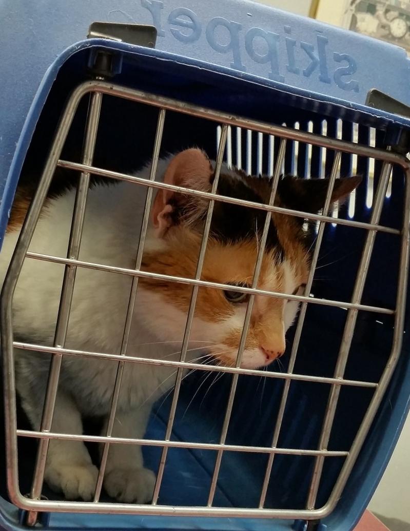 Перевозка кошек фото
