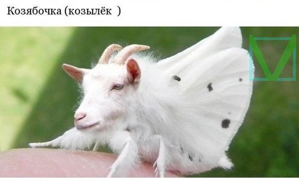 бабочка с головой козы фото