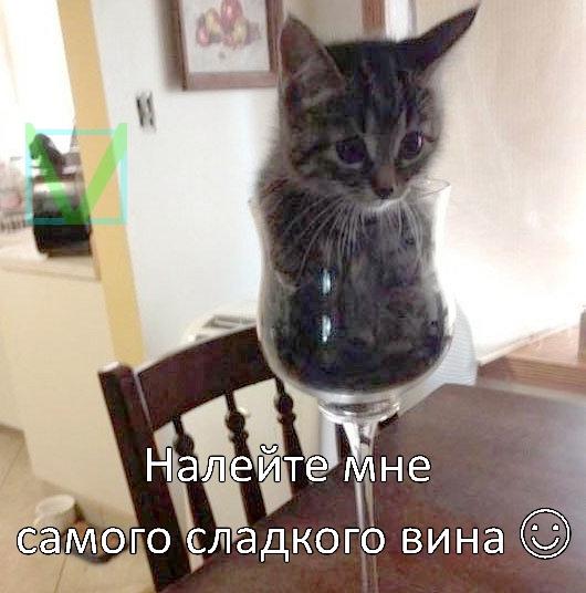кошка-жидкость фото