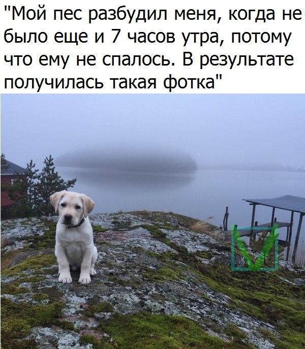 собака на красивом фоне фото