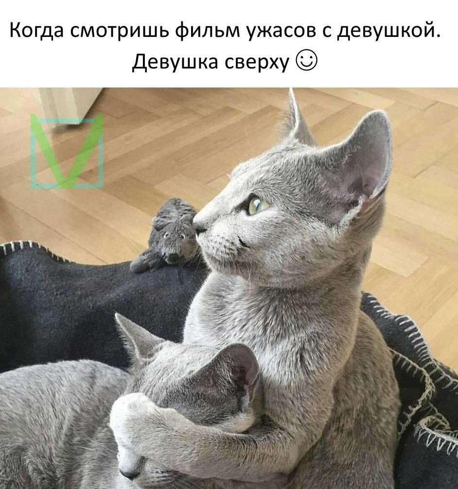 Приколы с животными 5. Фото 2