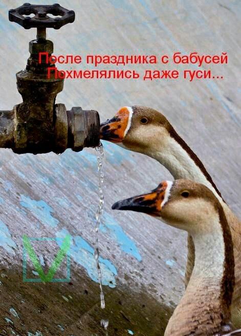 Приколы с животными 6. Фото 4