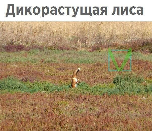 Приколы с животными 8. Фото 8